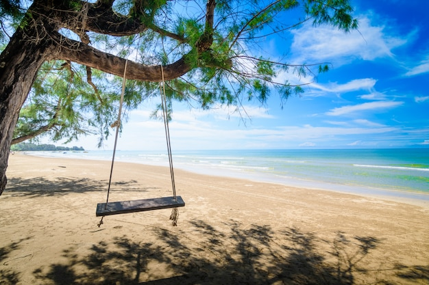 Wooden swing hanging from a tree on the beach.