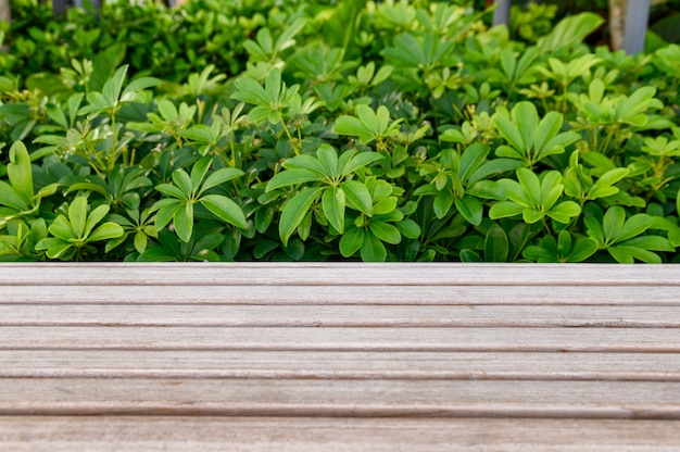 Wooden tabletop with green plant