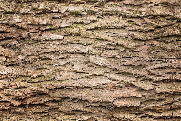 Wooden texture background, bark of tree