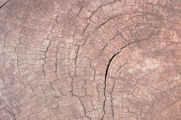 Деревянная предпосылка текстуры. текстура коричневого дерева, текстура старого дерева для добавления текста или рабочего дизайна для фонового продукта. вид сверху