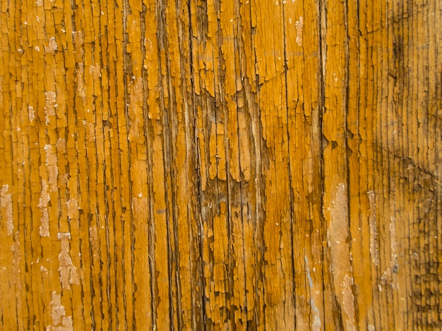 Wooden texture. tree bark. bark texture natural background.
