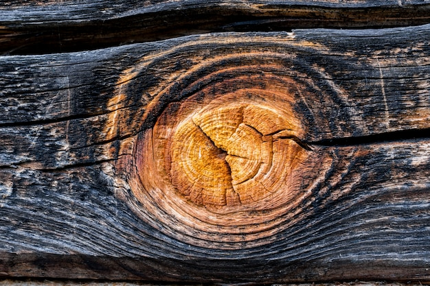 Wooden texture with twigs