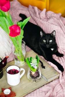 Wooden tray with tea, spring flowers and black cat on a cozy bed, vertical photo. selective focus. high quality photo