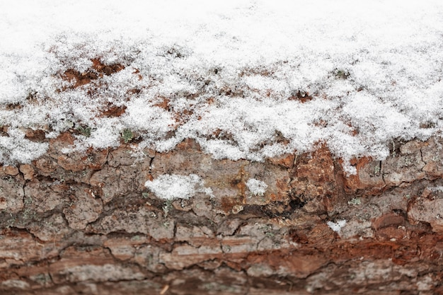 Деревянный ствол дерева со снегом
