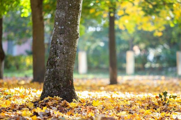 Деревянный ствол большого дерева с опавшими желтыми листьями в осеннем парке.