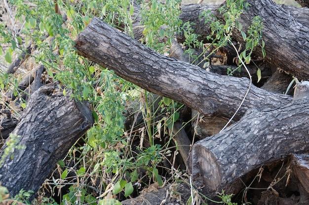 나무 줄기