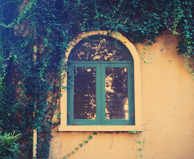 Wooden vintage window with creeper leaves plant