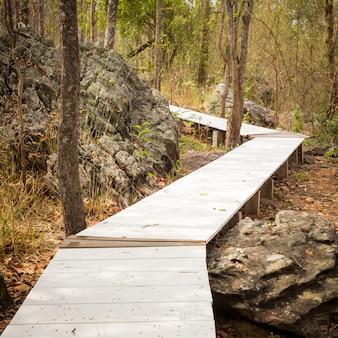 乾いた森の中の木道