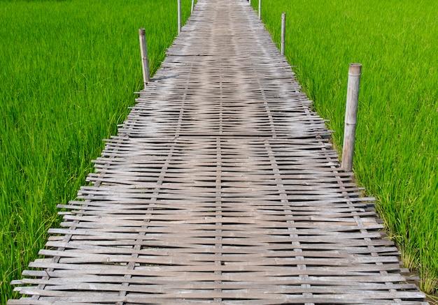 Wooden walking pathway in green rice field landscape.