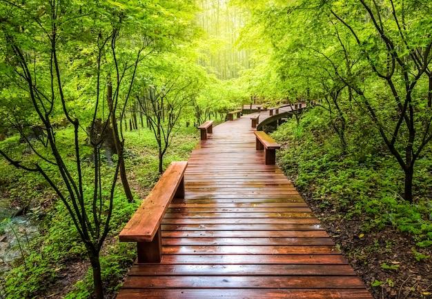 夏の木製の歩道と緑の自然の風景、森の遊歩道