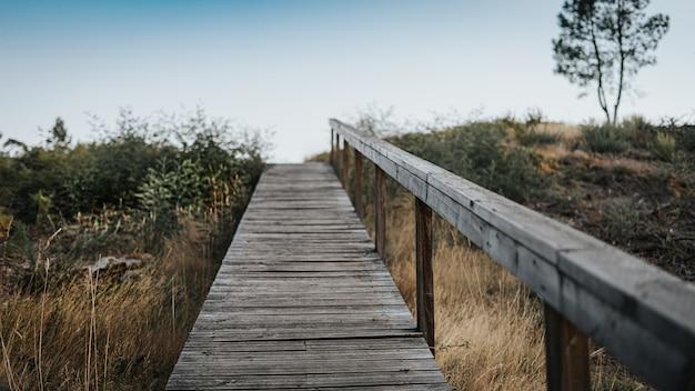 Passerella in legno che attraversa un campo di erba e alberi