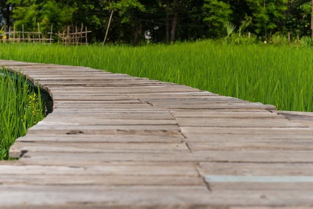 Деревянная дорожка в полях