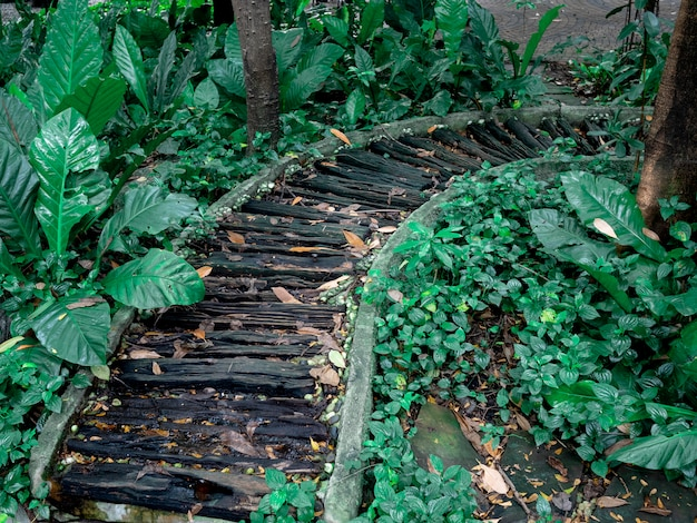 Wooden walkway inthe garden