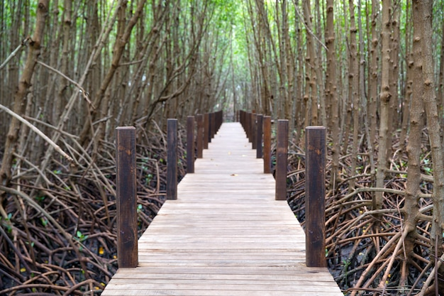 Wooden walkway to study the nature of the mangrove forest.