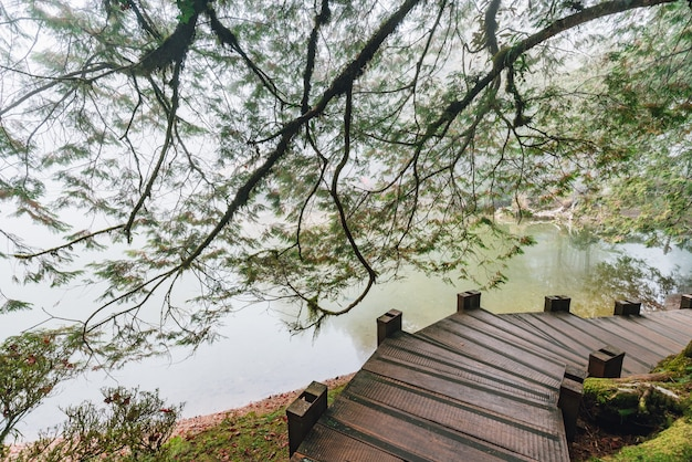 Wooden walkway that leads to cedar and cypress trees in the forest with ponds and fog in alishan national forest recreation area in chiayi county, alishan township, taiwan.