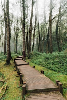 Wooden walkway that leads to cedar and cypress trees in the forest