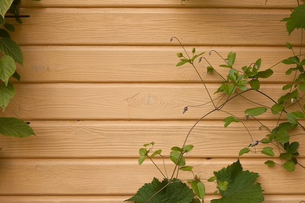 Wooden wall with ivy