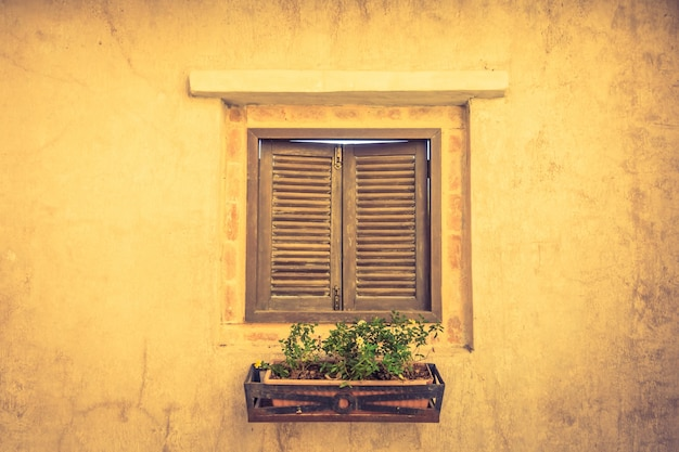 Wooden window with a flowerpot with plants