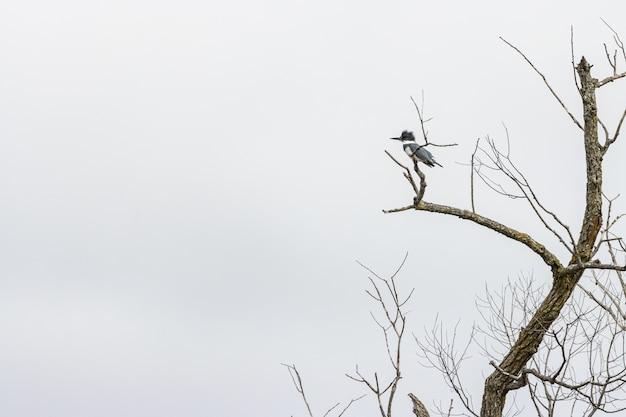 Дятел стоит на ветке дерева под пасмурным небом