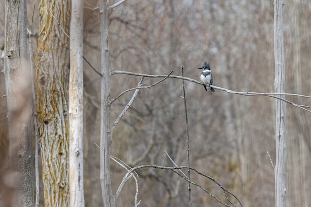 Woodpecker standing on a tree branch with a blurred background