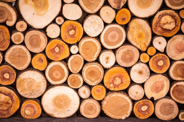 Woodpile of cut lumber trees