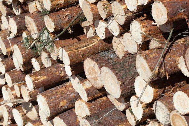 Поленницы из свежесрубленных еловых бревен. стволы деревьев вырублены и сложены в лесу. деревянные бревна. селективный фокус