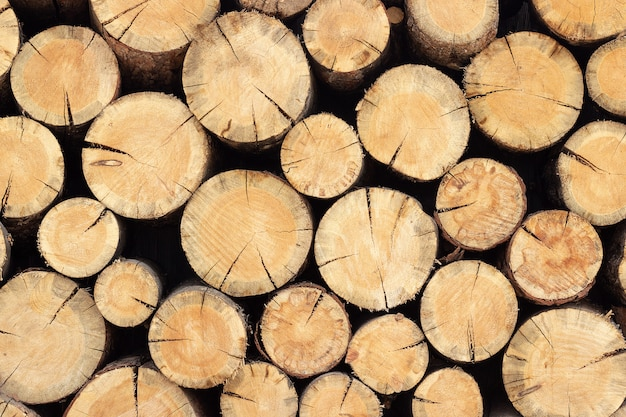 Woodpile stack of round logs of trees, abstract background texture for your design
