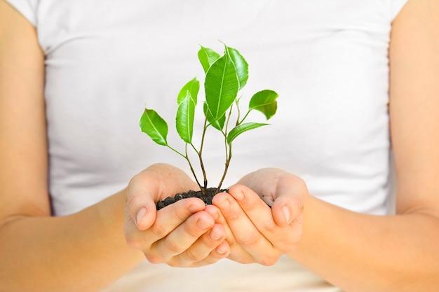 Wooman, держа растение в руках на белом