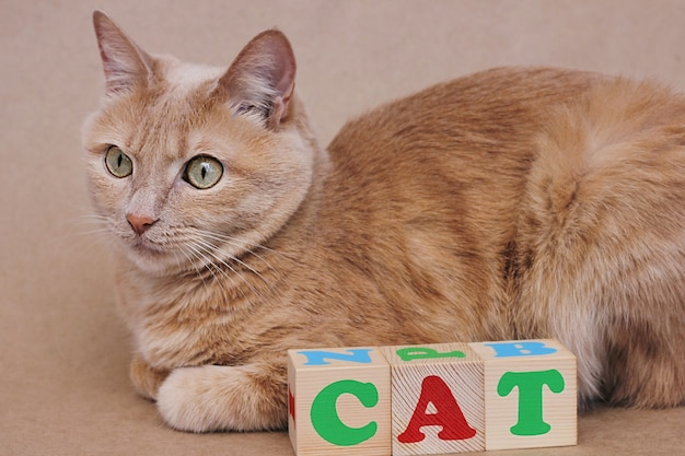 The word cat is laid out in wooden cubes next to the red cat. learning english.