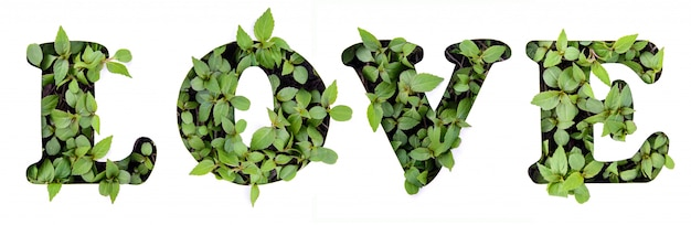 The word love of green leaves in a paper stencil