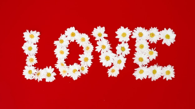 Word love made with white daisies