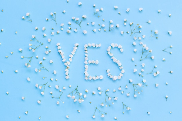 Word yes made of white flowers on a light blue background top view