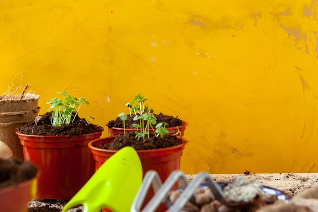庭の植木鉢での作業をクローズアップ