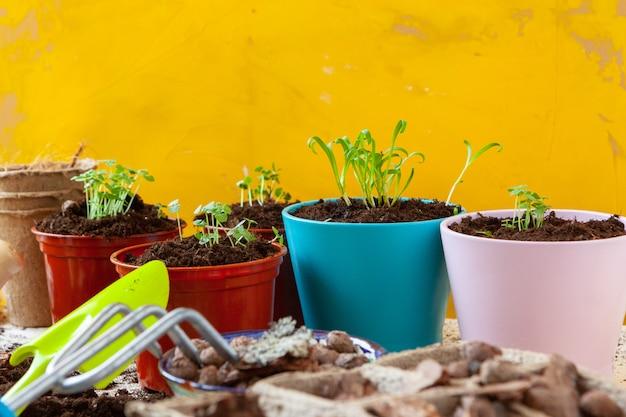 庭で働いて、鉢植え