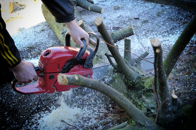 Worker cutting wood with a chainsaw .