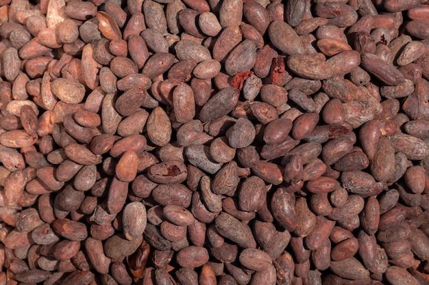 초콜릿 만들기 공장에서 코코아 콩 구이 노동자