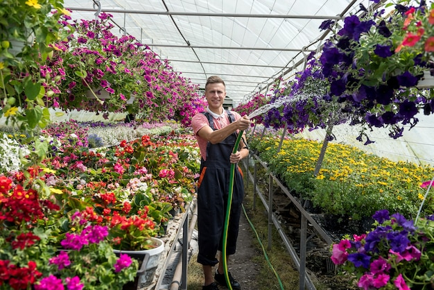 Worker watering flowers grown in a greenhouse for sale