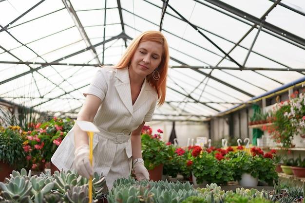 労働者は温室で多肉植物の成長と発達を監視します