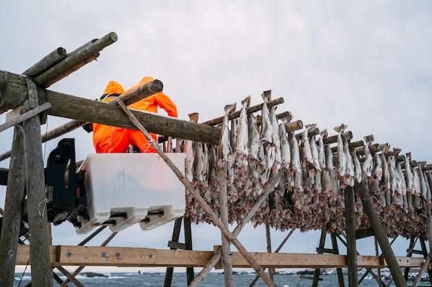 Рабочие на деревянной стойке с вяленой рыбой зимой