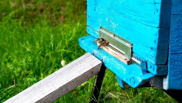 働くミツバチは巣箱の中の蜂蜜です。