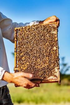 Рабочие пчелы на сотах. рамки пчелиного улья. пчеловодство