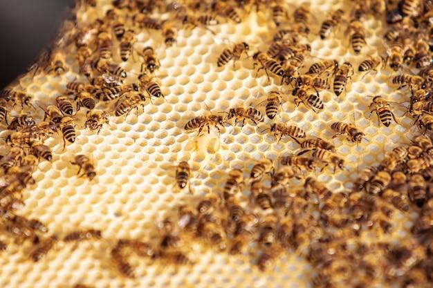 Рабочие пчелы на сотах. Premium Фотографии