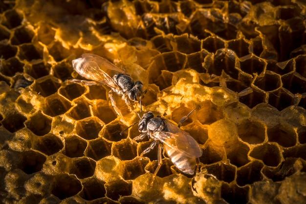 Пчелы работают на сотах природы со сладким медом.