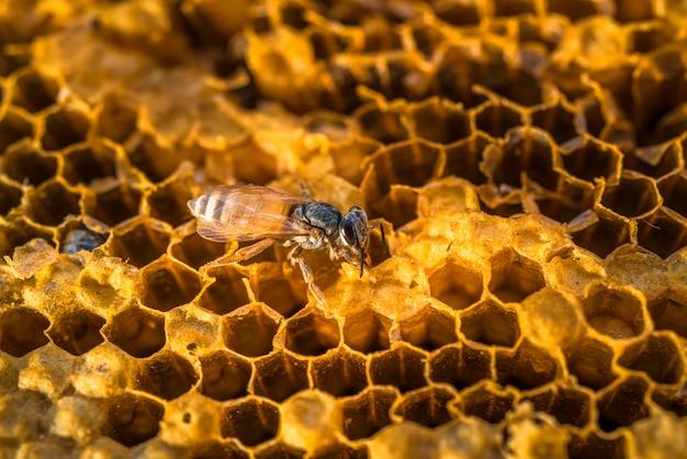 甘い蜂蜜と自然の蜂の巣に働き蜂。
