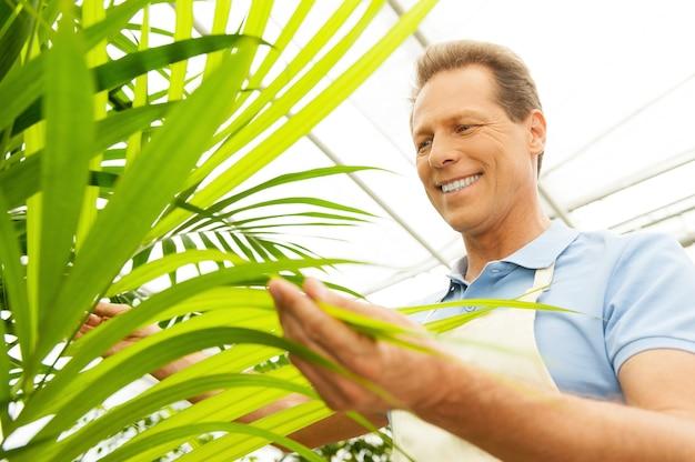 즐겁게 일하고 있습니다. 균일한 정원 가꾸기와 웃는 잘생긴 성숙한 남자의 낮은 각도 보기