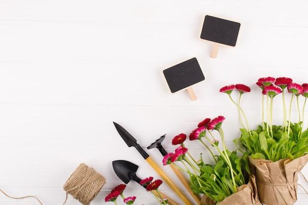 ワークスペース、春の花を植える。園芸工具、鉢植え、水まき缶の植物を白いテーブルの上。上面図