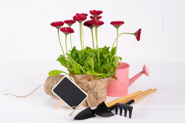 ワークスペース、春の花を植える。園芸工具、鉢の植物および白いテーブルの水まき缶