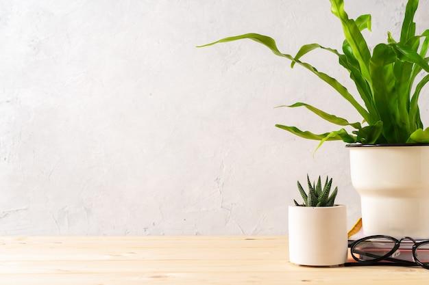 Сочные растения на рабочем месте и принадлежности с копией пространства для текста, стильный и минималистичный домашний офис