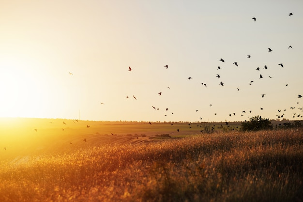 World environment concept. birds flying on meadow in summer sunset.