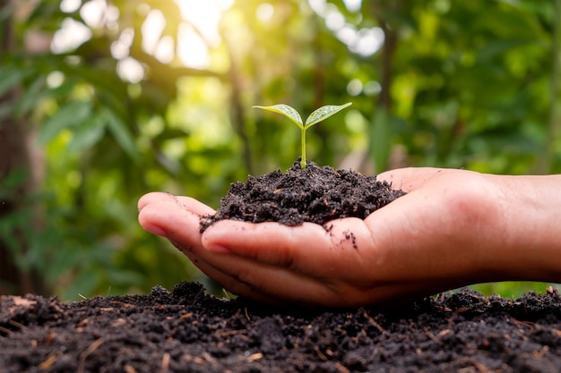 세계 환경의 날과 재조림 개념은 토양에 심기 위해 손으로 작은 나무를 잡고 있는 소녀의 손으로 환경을 구합니다